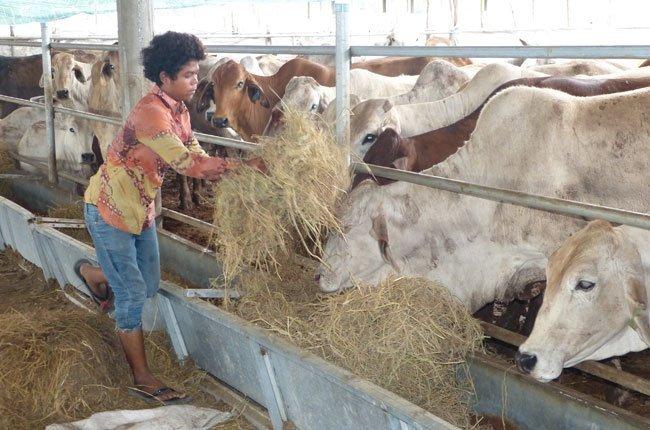 Nhập khẩu trâu bò Úc, Thái tăng gần gấp đôi
