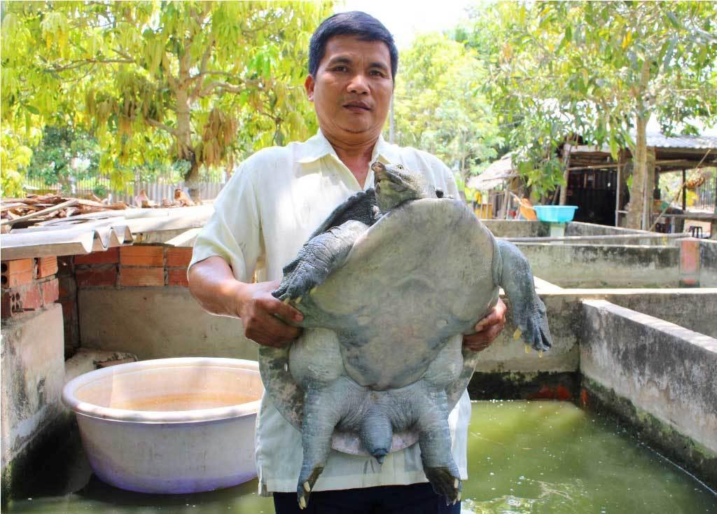 Ác chiêu đầu độc:Đục lỗ tiêm hóa chất vào cua