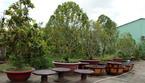 Trụ sở ủy ban thành nơi bán cây cảnh, ăn uống