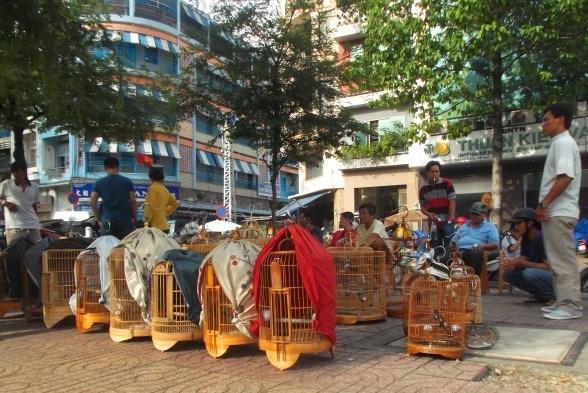 Lạnh người khu chợ lúc nhúc côn trùng ở Sài Gòn