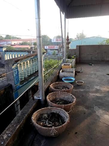 Thán phục Hà Thành: Trồng rau sạch trong bao tải, lốp ôtô