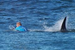 Vận động viên lướt sóng tay không đánh cá mập