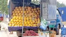Dân Việt ăn 60 tấn dưa lưới vàng Trung Quốc/ngày