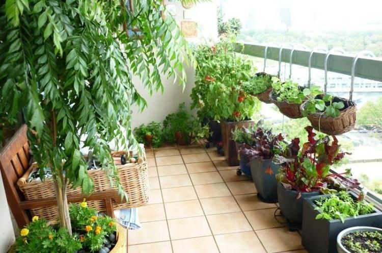 Kết quả hình ảnh cho tự trồng rau sạch ngoài ban công