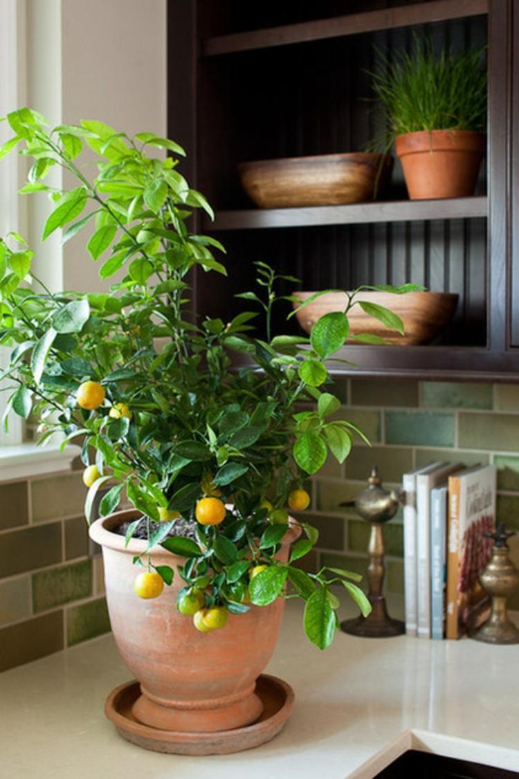 Bí quyết trồng rau sạch ở ban công đủ ăn quanh năm cho cả gia đình