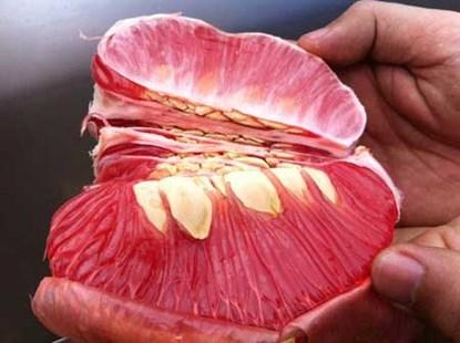 Xoài tím sẫm, chuối đỏ rực: Vừa ăn vừa run
