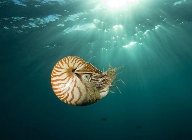 Thủy quái biển sâu giá trăm triệu được đại gia săn lùng