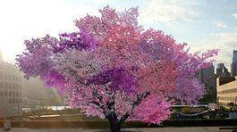 Giống cây kỳ lạ cho tới 40 loại quả khác nhau