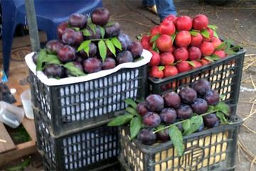 Mận khủng tím bầm: Đích thị hàng Tàu lừa dân Hà Thành