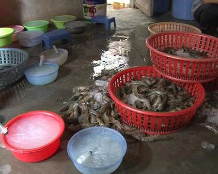 tôm chết, bơm tạp chất, bột thạch rau câu, tăng trọng, thủy sản, nhiễm độc, tôm-chết, bơm-tạp-chất, Agar, bột-thạch-rau-câu, tăng-trọng, thủy-sản, nhiễm-độc,
