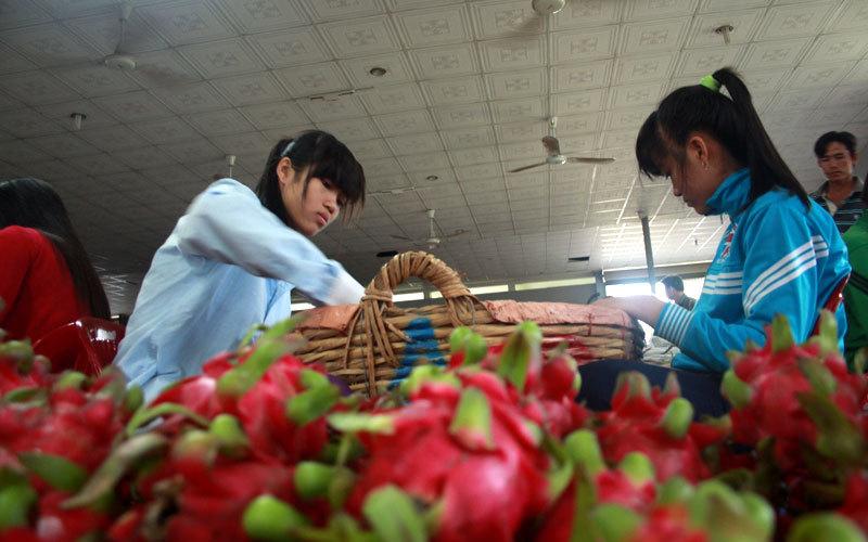 thanh long, Long An, xuất khẩu, nông nghiệp, HTX, vay vốn ưu đãi