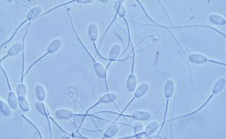 tinh dịch, phụ nữ, đàn ông, biến đổi gen