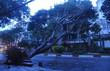 Sài Gòn mưa lớn, cây xanh gãy đổ hàng loạt