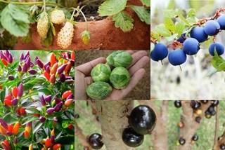 'Mê mệt' hạt giống các loại cây tí hon: Cẩn thận nguy hiểm