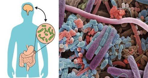 Bệnh trầm cảm có thể bắt nguồn từ vi khuẩn trong bụng?