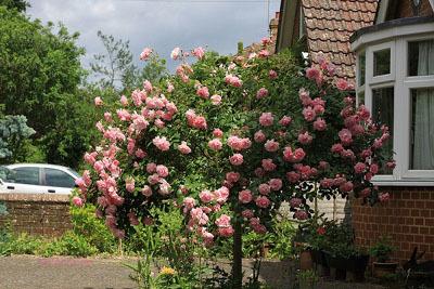 6 bước đơn giản để có được một khu vườn xinh đẹp