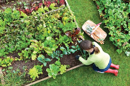 Ngất ngây với những khu vườn xinh xắn trước hiên nhà