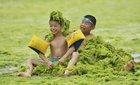 Vô tư nô đùa trên bãi biển phủ đầy tảo xanh