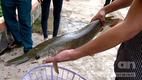 Đồng Tháp: Người dân liên tục bắt được cá lạ
