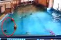 Bé trai suýt chết đuối dưới bể bơi có đông người