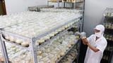 Một tiến sĩ Việt Nam nghiên cứu nuôi cấy thành công Đông trùng Hạ thảo
