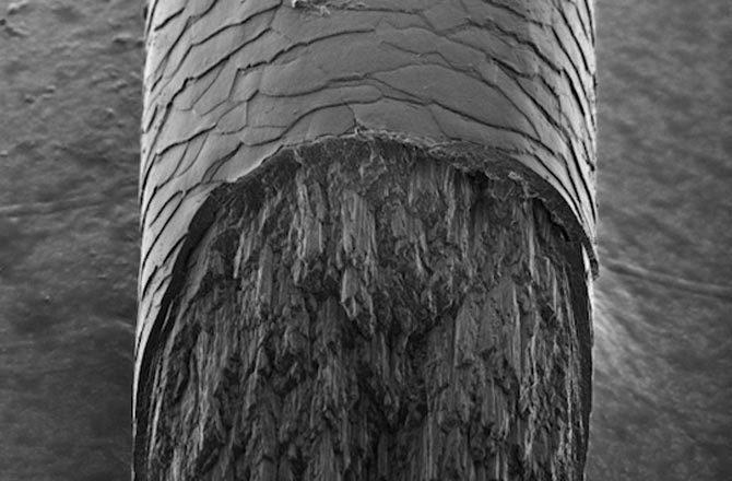 Phát hiện thành phần bí ẩn của tóc