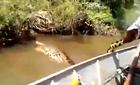 """Bắt trăn Anaconda """"khủng"""" sông Amazon bằng tay không"""
