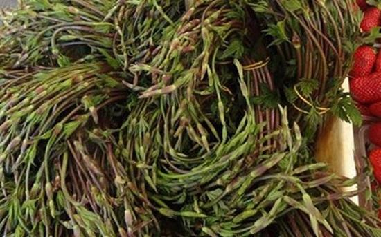 Nhà giàu Việt ăn chồi hoa bia: 1.000 Euro/kg