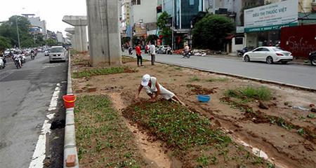 Người dân Thủ đô trồng rau dưới chân đường sắt trên cao
