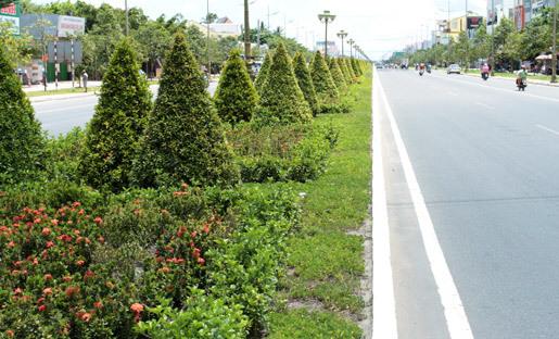 cây xanh, chăm sóc, cần thơ, duy tu, thanh tra, Bình thủy, Ninh Kiều